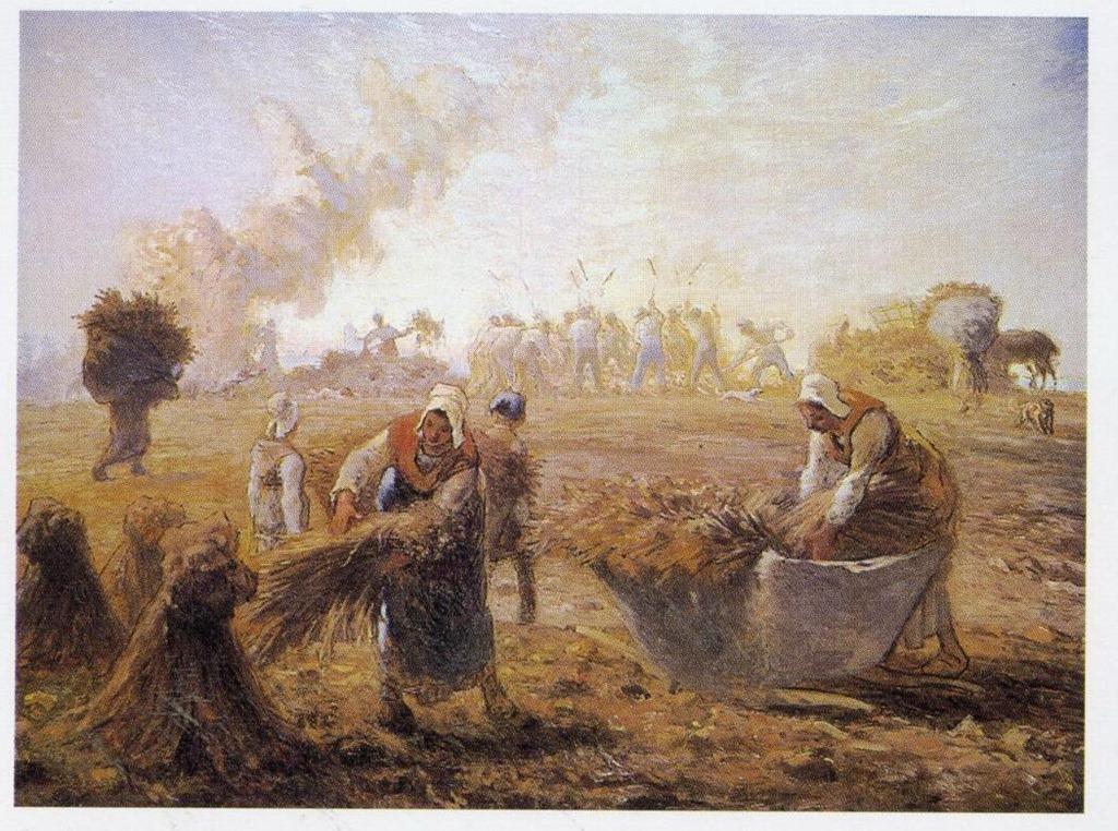 ミレー蕎麦の収穫夏へ